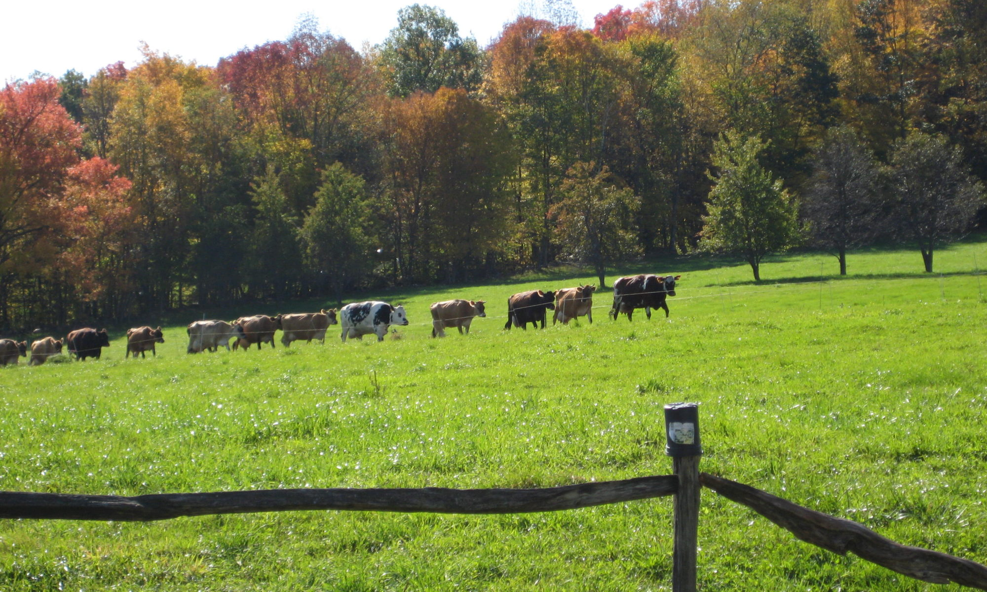 Livewater Farm & Dairy